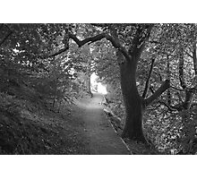 Forest Path BW Photographic Print