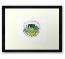 Succulent Bowl Framed Print