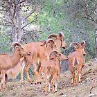 Arrui in Sierra Espuna by HolidayMurcia