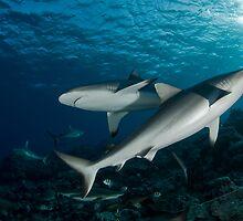 Shark-Unitiy by Valerija S.  Vlasov