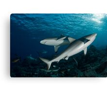 Shark-Unitiy Canvas Print