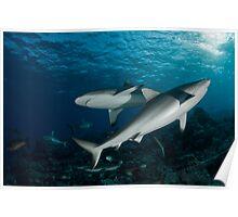 Shark-Unitiy Poster