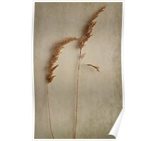 Two blades of seed grass  Poster