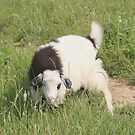 Goat a Little Worried by Dennis Melling