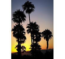 Hollywood Palm Photographic Print
