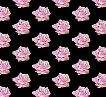 WATER ROSE COLLECTION by Shoshonan