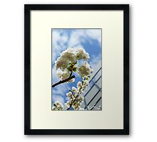 White Cherry Blossoms - The flower of happiness Framed Print