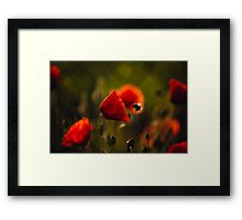 Bumble-bee Framed Print