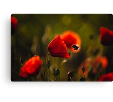 Bumble-bee Canvas Print