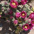 Blooming Cactus by IreKire