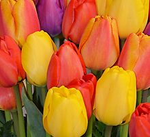 Colourful tulips bunch by perlphoto
