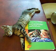 Katzenkinder erziehen by Valerija S.  Vlasov