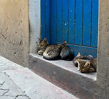 Cat life in the streets of Mombasa by Valerija S.  Vlasov