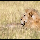 King of the Serengeti by Jeanne Frasse