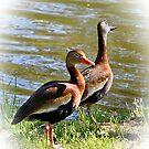Black Bellied Whistling Ducks by DottieDees