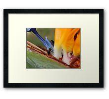 colors 2 Framed Print