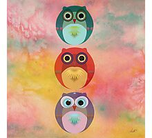 Three Little Owlets Photographic Print