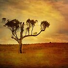Lonesome Gum by Clare Colins