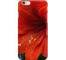 Ruby Red Amaryllis  iPhone Case/Skin