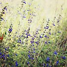 Wildflowers by Karen E Camilleri