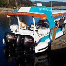 Bay of Fires Eco Tours by jayview