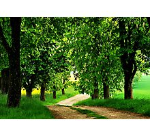 Walking under chestnut trees Photographic Print
