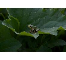 Frog in the Green Photographic Print
