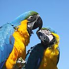 Brothers Blue & Yellow by Jo Nijenhuis