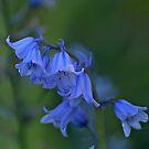Spanish Bluebells by WatscapePhoto