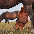 Below A Mustang by Gene Praag