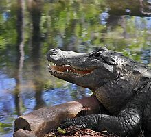 Florida - Where the Alligator smiles by Christine Till  @    CT-Graphics