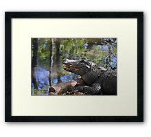 Florida - Where the Alligator smiles Framed Print