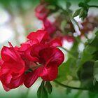 Red Geranium by WeeZie