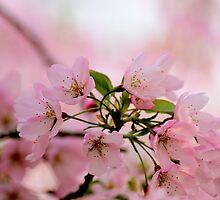 Bloom Bloom Bloom by Elena J