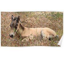Springtime Foal Poster
