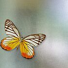 Butterfly on Glass by NANDANNAG