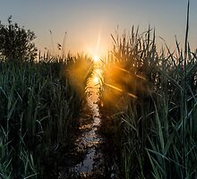 I Like Suns Day by THHoang