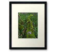Hollington Wood  Framed Print