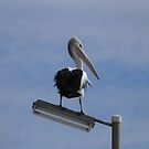 'HAS THAT DOG GONE YET'!  Henley Beach Jetty, Adelaide. S.A. by Rita Blom