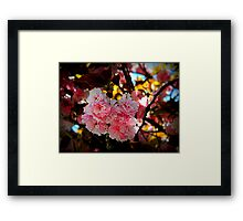 Cherry Blossoms       ^ Framed Print
