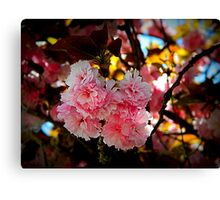 Cherry Blossoms       ^ Canvas Print