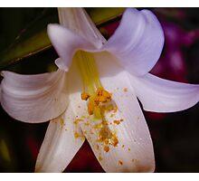 Vibrant Lily Photographic Print