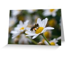 Pollen Sac Greeting Card
