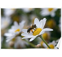 Pollen Sac Poster