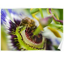 Passion Bee Poster