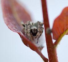 Spider Leaf by Valerija S.  Vlasov