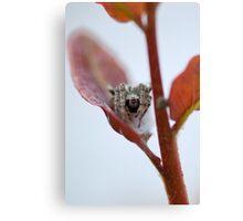 Spider Leaf Canvas Print