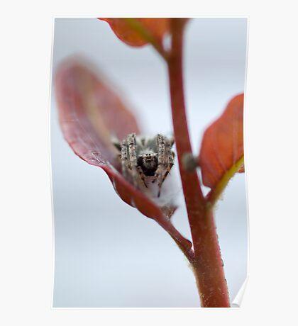 Spider Leaf Poster