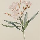 English School, early 19th Century A COLLECTION OF 11 BOTANICAL WATERCOLOURS by MotionAge Media