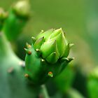 Old Mexico Cactus Bud by Bill Morgenstern